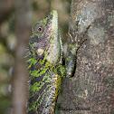 Whistling Lizard