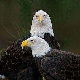 Bonded Pair by John Larson - Animals Birds