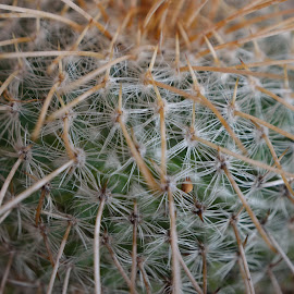 Spiky Catus by Richard Booysen - Nature Up Close Gardens & Produce ( prickly, cactus )