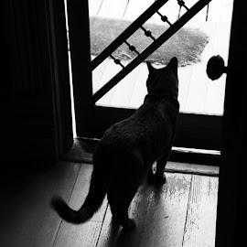 by Joel Stefaniak - Animals - Cats Portraits (  )