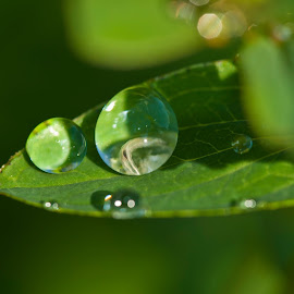 Life in a drop of watter by Saso Veselko - Nature Up Close Leaves & Grasses