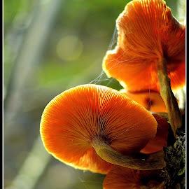 by Subinoy Das - Nature Up Close Mushrooms & Fungi