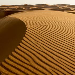 Nature's Strobe by Ajay Sood - Landscapes Deserts ( sanddune, sand, dunes, desert, sanddunes, dubai, uae, dune, travel, travelure, desertscape, travelography )