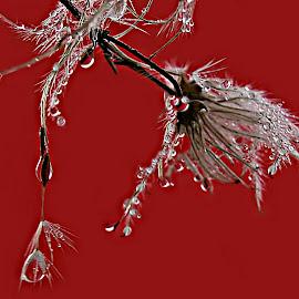 Don't Stop Playing by Marija Jilek - Nature Up Close Natural Waterdrops ( playing, water, wild clematis, nature, drops, plants, natural waterdrops )