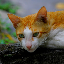 My Cat by Fuad Arief - Animals - Cats Portraits (  )