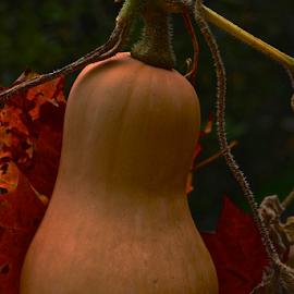 october by MIrella Napolitano - Food & Drink Fruits & Vegetables