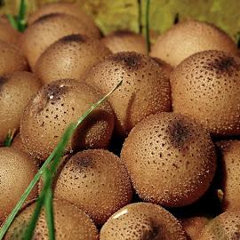 by Dipali S - Nature Up Close Mushrooms & Fungi