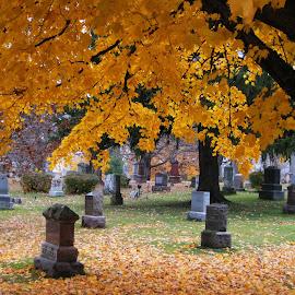 Cemetery #3 by Dan Dusek - City,  Street & Park  Cemeteries ( cemetery, headstones, gravestones, artistic objects, graveyard,  )