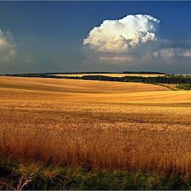by Ivan Rusek - Landscapes Prairies, Meadows & Fields