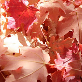 fall leaves by LaDonna Beardall - Nature Up Close Leaves & Grasses