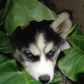 Luna in lillies by Lawrence Darrah - Animals - Dogs Puppies (  )