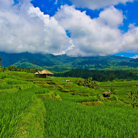 green grass and clear blue sky by Yoshua Viventius - Landscapes Prairies, Meadows & Fields ( bali, mountain, sky, indonesia, green )