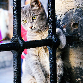 prisoner by Kenan G Kurtovic - Animals - Cats Playing ( cats, sarajevo, canon eos, kitty, daylight, downtown, prisoner )
