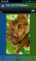 Screenshot of Cute Cat HD Wallpapers
