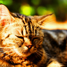 Sleepy head by Dhanu Kusumanto - Animals - Cats Portraits ( cat, sleepy, cute, blurry, garden )