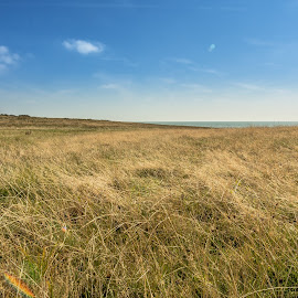 #landscape by Tavi Ionescu - Landscapes Prairies, Meadows & Fields ( field, blue sky, nature, 2014, prairies, meadows, relaxing, landscape, united kingdom, fields,  )