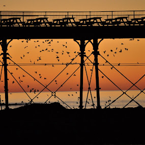 starlings at sunset by Hannah Rugg - Landscapes Travel