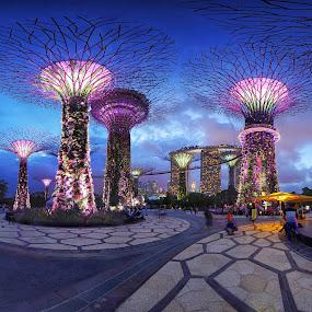 by Vince Chong - City,  Street & Park  City Parks