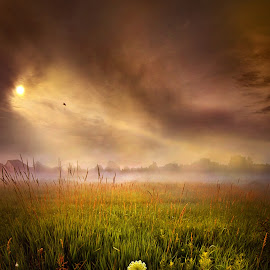 Alone by Phil Koch - Landscapes Prairies, Meadows & Fields ( clouds, vertical, wisconsin, park, green, horizon, scenic, phil koch, spring, photography, shadows, red, sky, nature, tree, sunset, meadow, trees, sunrise, horizons, landscapes, floral )