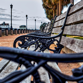 Benches by Carol Plummer - City,  Street & Park  City Parks ( charleston, waterfront park )