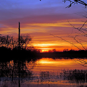 Fire Sky by Jamie Hodge - Landscapes Sunsets & Sunrises ( sunset, reflections, trees, pond, sun,  )