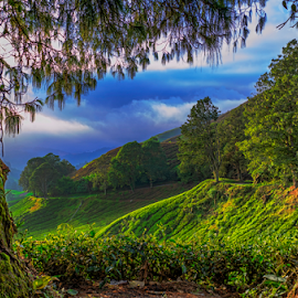Cameron Highland by KIN WAH WONG - Landscapes Travel ( pure, nature, cameron, malaysia, scenery, highlands, tea, landscapes, plantation )