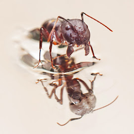 by Alí AWaís - Abstract Macro ( animals, reflection, macro, nature, ants, insects )