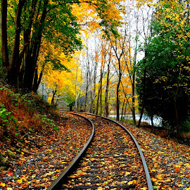by Julie Dabour - Transportation Railway Tracks ( , fall, color, colorful, nature )
