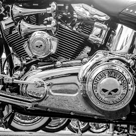 Harley-Davidson Heritage Softail by Gimo Nasiff - Transportation Motorcycles ( harley, monochrome, gimo, engine, image, softail, heritage, photography, bike, moto, guillermo, davidson, producer, photographer, motorcycle, motocicleta, nasiff )