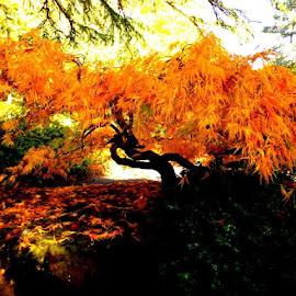 Kubota Garden by Edie Delzer - Novices Only Landscapes