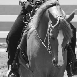 At work by Melissa Parrish - Novices Only Pets ( horseback, horse, agriculture, cowgirl, western )