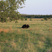 Wildlife of the Wichita Mountains Wildlife Refuge