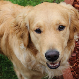 by RichandCheryl Shaffer - Animals - Dogs Portraits (  )