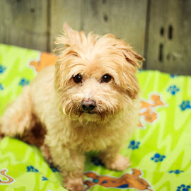 Sweet Sparky by Tonya Sheetz - Animals - Dogs Portraits ( animals, dogs, dog, portrait, animal )