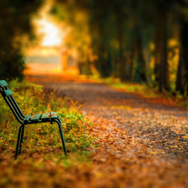 Loneliness in park by David Ovidiu - City,  Street & Park  City Parks ( city parks, bench, autumn, city park, alley )