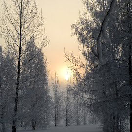 Surreal Winter Trees by Linda Doerr - Nature Up Close Trees & Bushes ( winter, surrealism, trees, forest, morning,  )