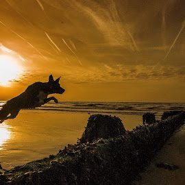 Super pup  by Stephen Page - Animals - Dogs Running