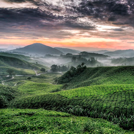 Having A good Time During Sunrise by Xicro Kuyon - Landscapes Mountains & Hills ( clouds, hills, nature, fog, sunrise, landscapes, moments, tea plantation )