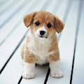 App Cute Little Puppies Wallpapers APK for Kindle