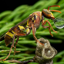 Waterball Is Bigger Than My Head. by Carrot Lim - Animals Insects & Spiders