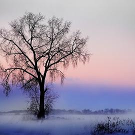 Blowing Through by Adam Schroeder - Landscapes Prairies, Meadows & Fields