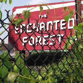Enchanted Forest by Laurie Higgins - City,  Street & Park  Amusement Parks