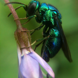 iphone 3 Gs by Ruyat Supriazi - Instagram & Mobile iPhone ( fly, bee, insect, flower )