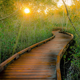 Off track by Kim Stecina - Buildings & Architecture Bridges & Suspended Structures ( enchanted wild boardwalk sunset green jungle flora fauna tropical fairies forest lost wilderness )