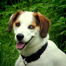 Pocoyo by Maria Pusporini Ratliff - Animals - Dogs Puppies ( dogs, puppy, dog,  )