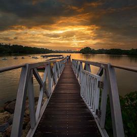 wetland by Kelvin Ng - Landscapes Sunsets & Sunrises