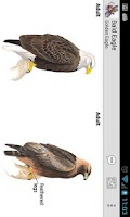 Screenshot of Sibley Birds of North America