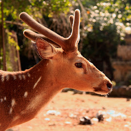 by Ismanto Lungsi - Animals Other Mammals