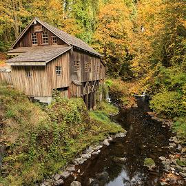 Grist Mill by Vldn Taylor - Landscapes Forests ( forests, washington, vldn taylor photography, grist mill, woodland, landscapes )