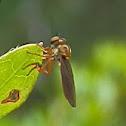 Robberfly